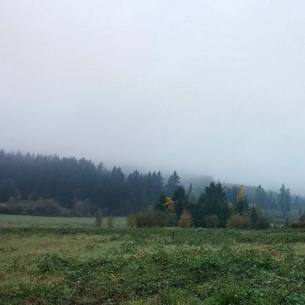 Follow the mist. Rural Clackamas County