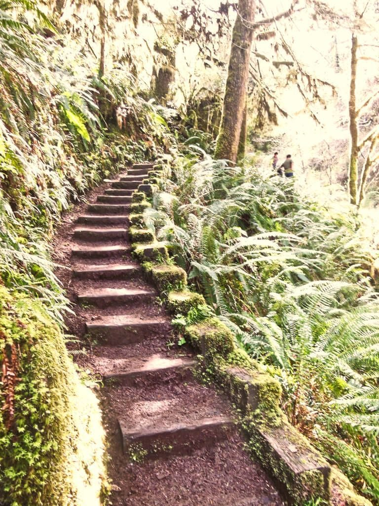 One of the best hikes I have ever been on...deep in the Willamette national forest